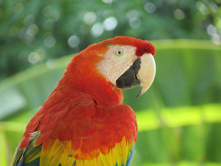 Animals, Parrot, Ave, Macaw, Nature, Plumage, Colorful