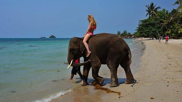 Sea, Elephant, Beach, Nature, Ocean, Thailand, Travel