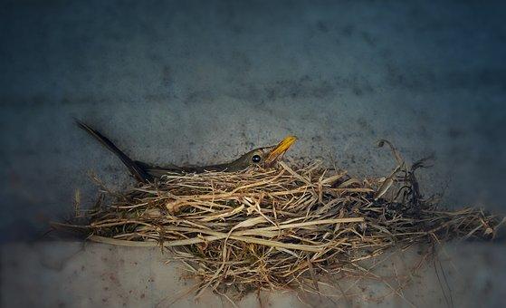 Nature, Birds, Bird, Feather, Animals, Mom, Cute, Nest