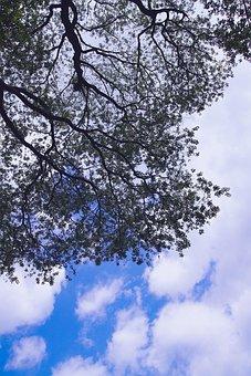 Wood, Cloud, Sky, Nature, Landscape, Scenery