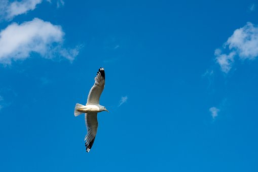 Gull, Sky, Fly, Bird, Clouds, Wing, Birds, Mood, Blue
