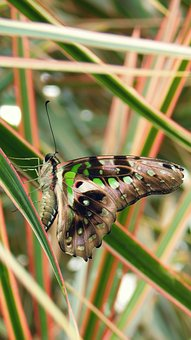 Butterfly, Bug, Wings, Animal World, Fauna, Color