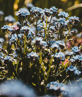 Flower Bed, Plant, Flower, Beautiful, Nature, Bokeh