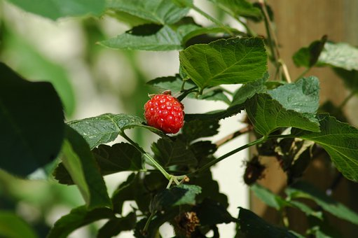 Fruit, Food, Leaf, Nature, Berry, Garden