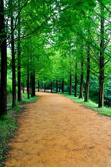 Wood, Forest, Forest Road, Nature, Scenery, Landscape
