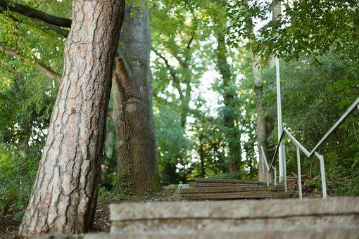 Gradually, Forest, Crooked, Trees, Tübingen, Hiking
