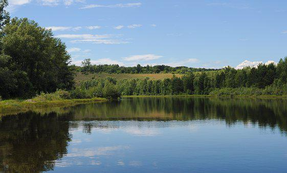 Summer, Background, Trees, Walk, Beauty, Green, Village