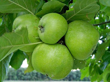Apple, Green, Immature Fruit