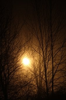 Bright, Light, Night, Sparkle, Leaves, Snow, Glowing