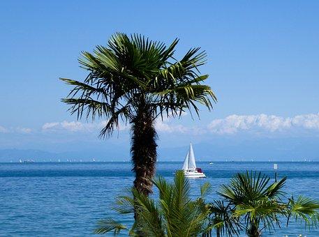 Landscape, Nature, Lake, Lake Constance, Tree, Palm
