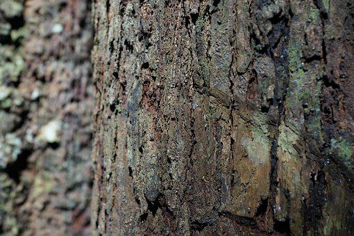 Bark, Pattern, Gnarled, Nature, Texture, Rough, Surface