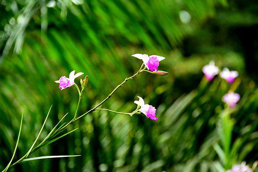 Wild Flowers, Flowers, Costa Rica, Plant, Nature, Pink