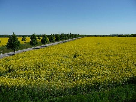 Landscape, Field, Road, Avenue, Sky, Rural, Fields