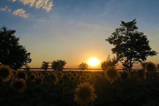 Sunset, Nature, Landscape, Sky, In The Evening