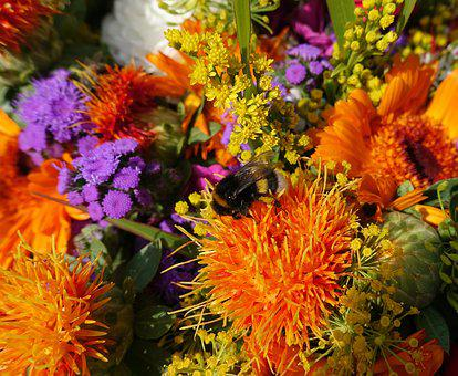 Summer Flowers, Colorful, Color, Garden, Summer, Nature