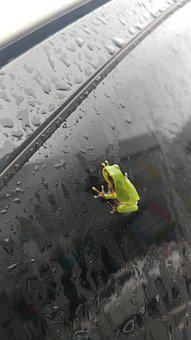 Frog, Non, The Body Of Water, Amphibians Of, One