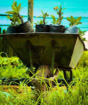 Grass, Wheelbarrow, Plants, Nursery
