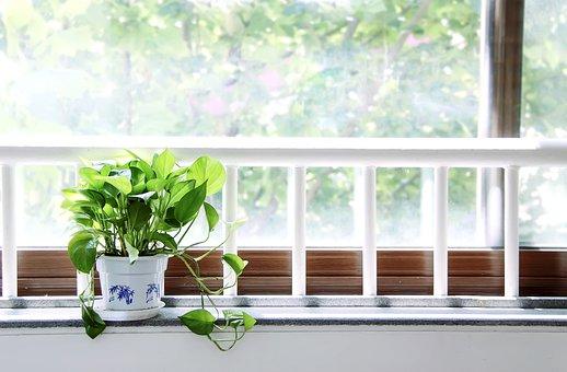 The Summer Solstice, Window, Noon, Green Plants