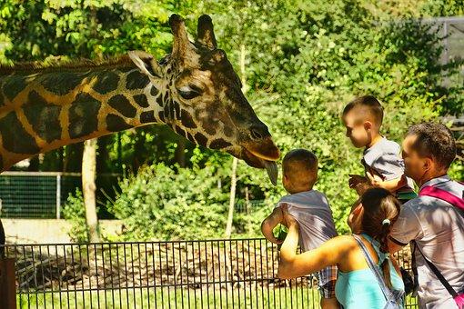 Zoo, Giraffe, Tongue, Human, Visitors, Family, Animal