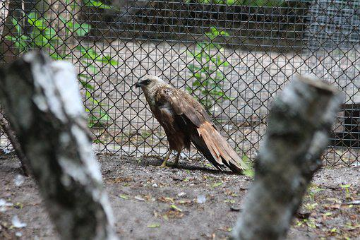 Bird, Bird Of Prey, Nature, Animal, Wild, Zoo, Cage
