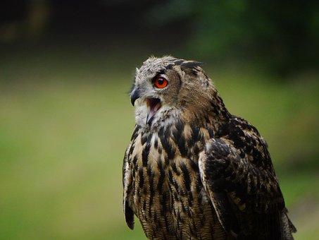 Eagle Owl, Bird, Fly, Water Bird, Sea, Sky, Flight