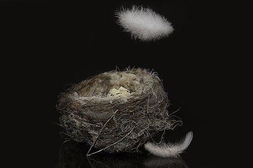 Bird's Nest, Egg Shells, Feather, Egg, Nest, Close Up