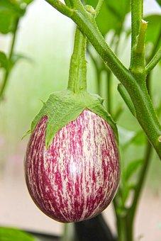 Eggplant, Garden, Nutrition, Vegetables, Healthy