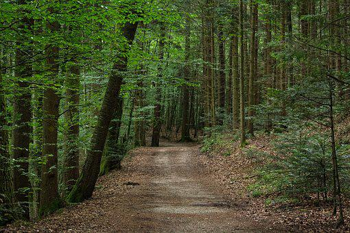 Forest Path, Away, Forest, Mixed Forest, Nature, Trail