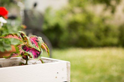 Flowers, Garden, Flower Pot, Colorful, Plant, Spring