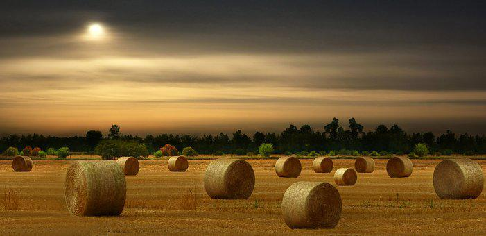 Hay Bales, Harvest, Summer, Field, Landscape