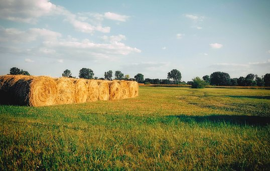 Hay, Straw, Agriculture, Harvest, Field, Summer