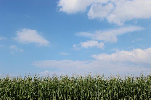 Cornfield, Clouds, Sky, Landscape, Summer, Harvest