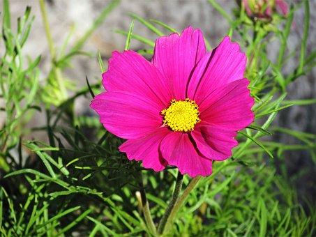 Flower, Floral, Pink, Park, Green, Grass, Leafs