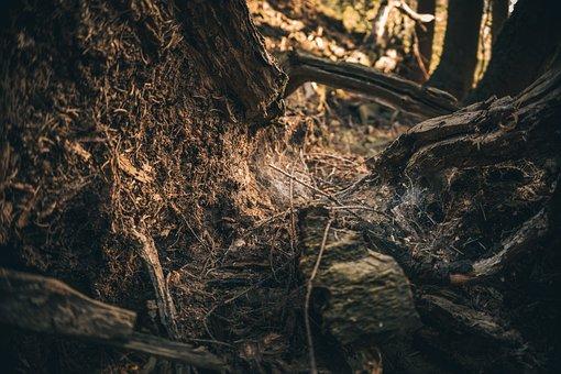 Tree, Tree Stump, Nature, Log, Forest, Wood, Moss