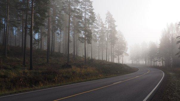 Fog, Morning, Landscape, Nature, Wood, Forest, Sunrise