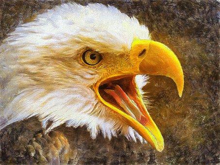 Eagle, Bird Of Prey, Pen, Nature, Beak, Flight