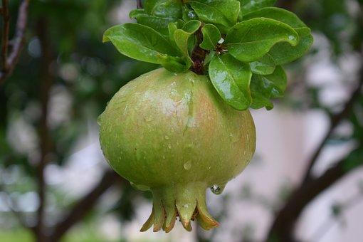Pomegranate, Fruit, Mat, Vitamins, Delicious, Nature