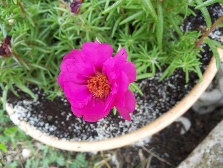 Flower, Garden, Greece, Pot