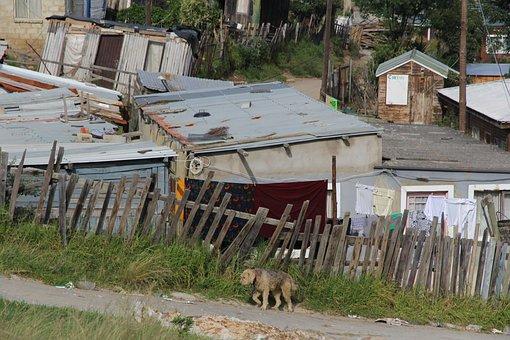 Township, Knysna, South Africa, Dog, Poverty, Boards
