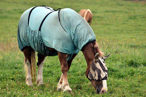 Horse, Horse Blanket, Protection, Insect Protection