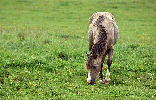 Horse, Meadow, Animal, Coupling, Nature, Graze, Small
