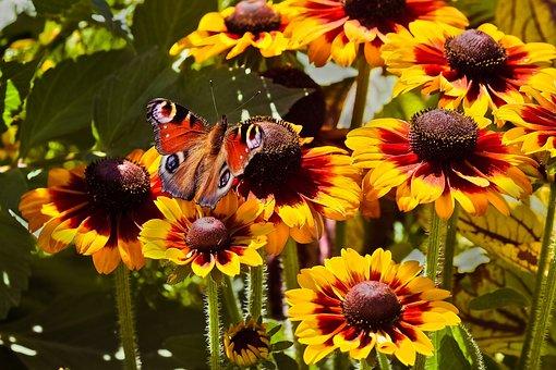 Flowers, Sun Hat, Blossom, Bloom, Nature, Summer, Plant