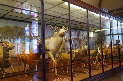 Museum, Animals, Stuffed, Mammals, Vienna