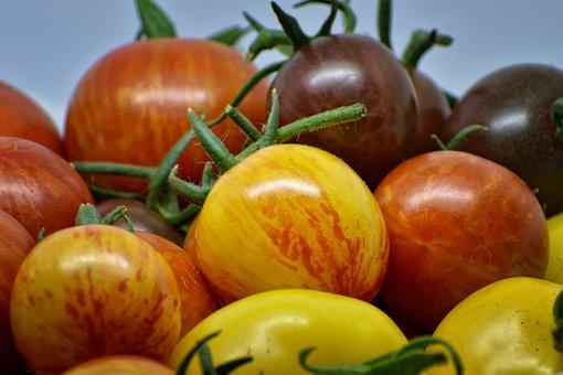 Wallpaper, Garden, Tomato, Summer, Plant, Vegetables
