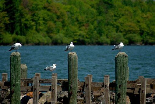 Gulls In Bayfield Harbor, Harbor, Wisconsin