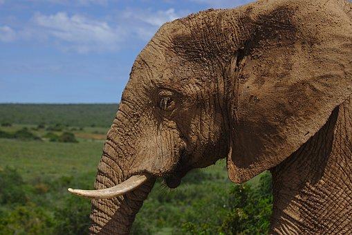 Addo, Elephant, Park, South, Africa, Nature, Wilderness