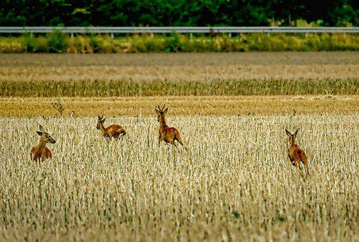 Landscape, Animals, Mammals, Deer, Escape