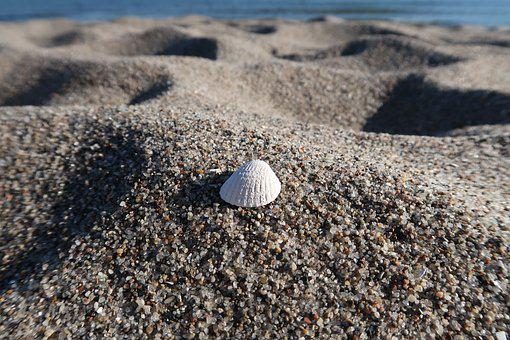 Shell, Sand, Beach, Sea, Quartz Sand, Fine Sand, Ocean