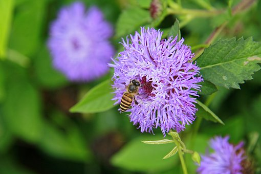 Flowers, Bee, Insects, Plant, Nature, Purple