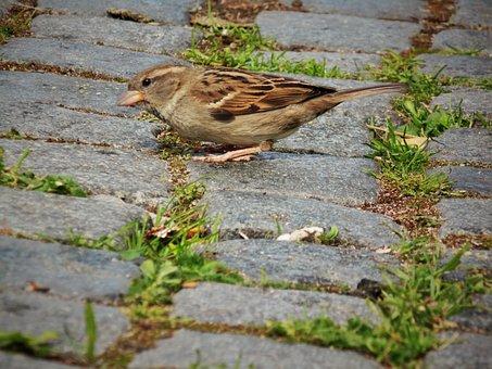 Sparrow, Close Up, Away, Bird, Nature, Plumage, Animal